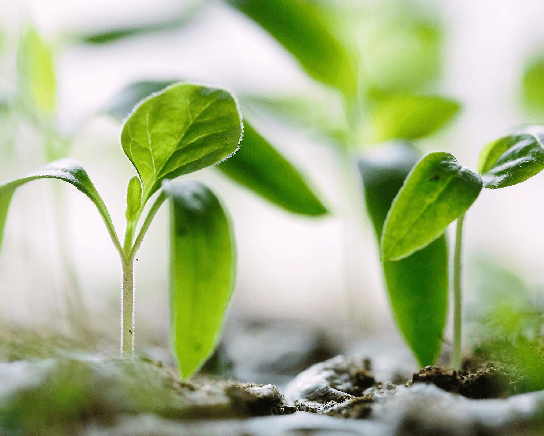 Ganz einfach Bäume pflanzen! 5 Organisationen und wichtige Tipps