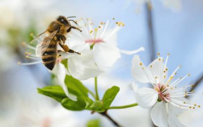 Für die Umwelt! 6 Tipps, um Bienen zu helfen!