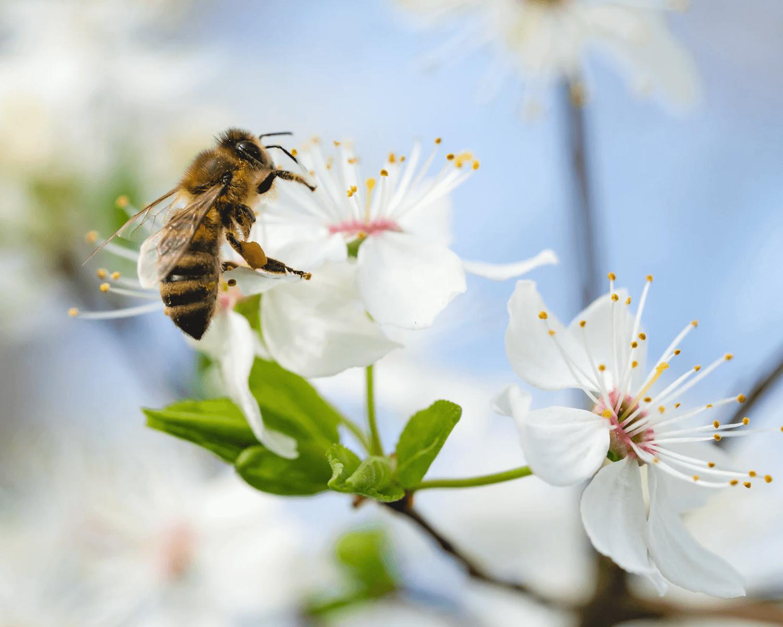 6 Tipps, um Bienen zu helfen!