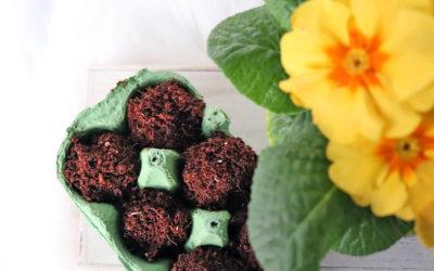 Der Frühling kann kommen! DIY Samenbomben für farbenfrohe Blumen