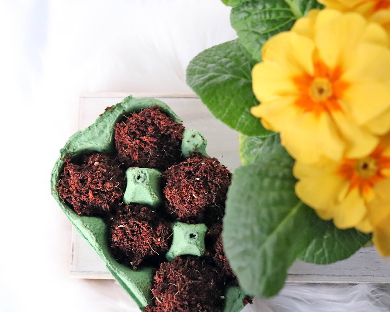 DIY Samenbomben für farbenfrohe Blumen