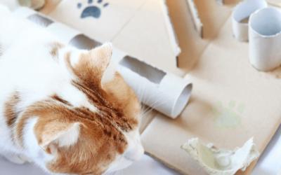 Nachhaltigkeit mit Haustieren – 5 wichtige Tipps!