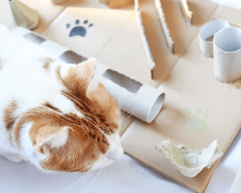 DIY Katzenspielzeug aus Pappe