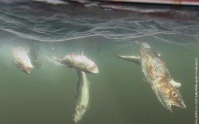 Für eine bessere Zukunft! Illegale Fisch-Rückwürfe stoppen!