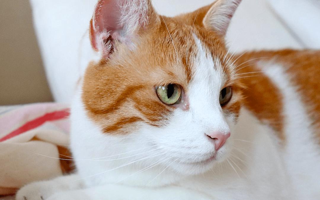Warum sollte ich eine Tierversicherung abschließen?