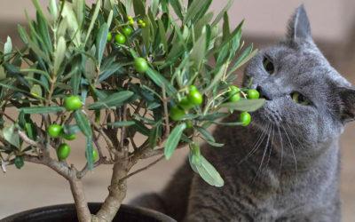 Diese Pflanzen sind giftig für Katzen!