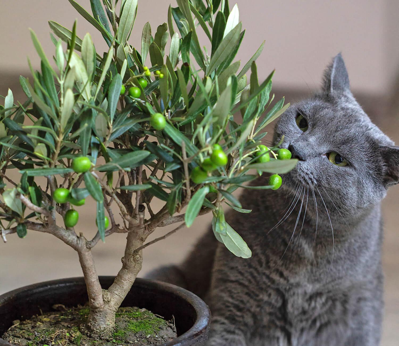 Diese Pflanzen sind giftig für Katzen