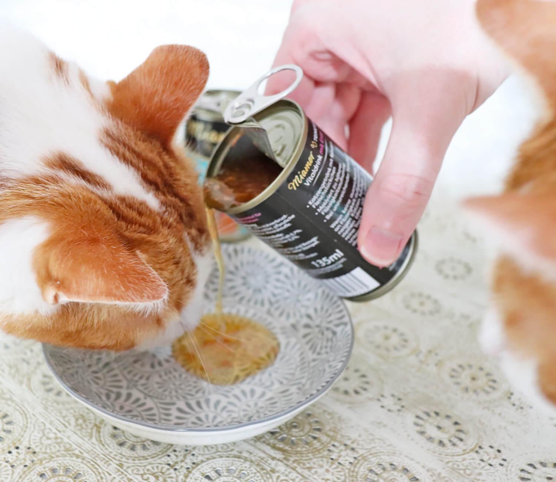 Katzen Trinken mehr - Miamor Trinkfein