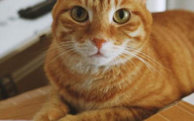 Umziehen mit Katzen: Tipps und Tricks, für weniger Stress!